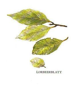 Kleine Gewürzfibel - Lorbeer