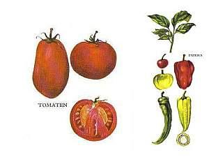 tomaten, paprika