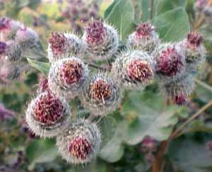 Heilende Pflanzen im Haushalt und in der Natur