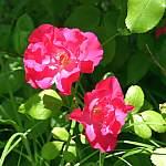 Heilende Pflanzen – Kleine Galerie E bis F